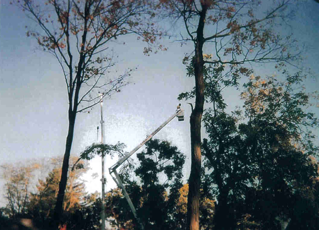 Tree Removal Glastonbury CT